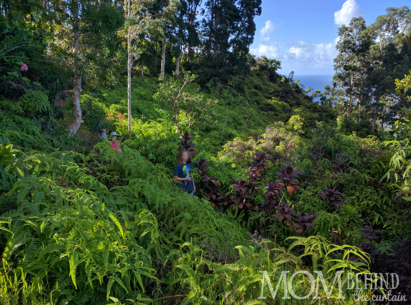 Waking through the rain forest in Maui's Garden of Eden.