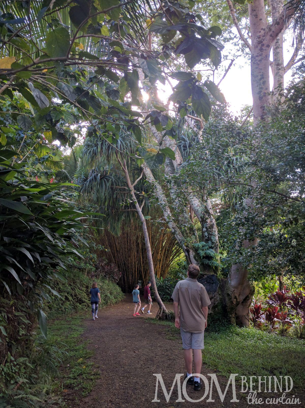 Easy walking hikes in Maui's Garden of Eden.