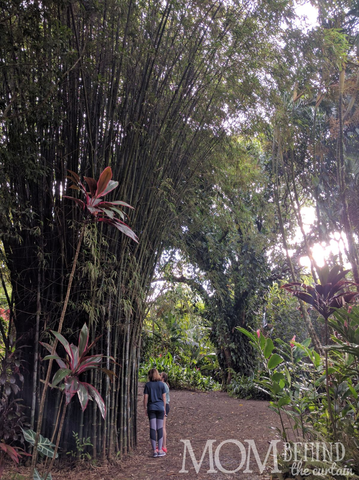 Bamboo in Maui's Garden of Eden.