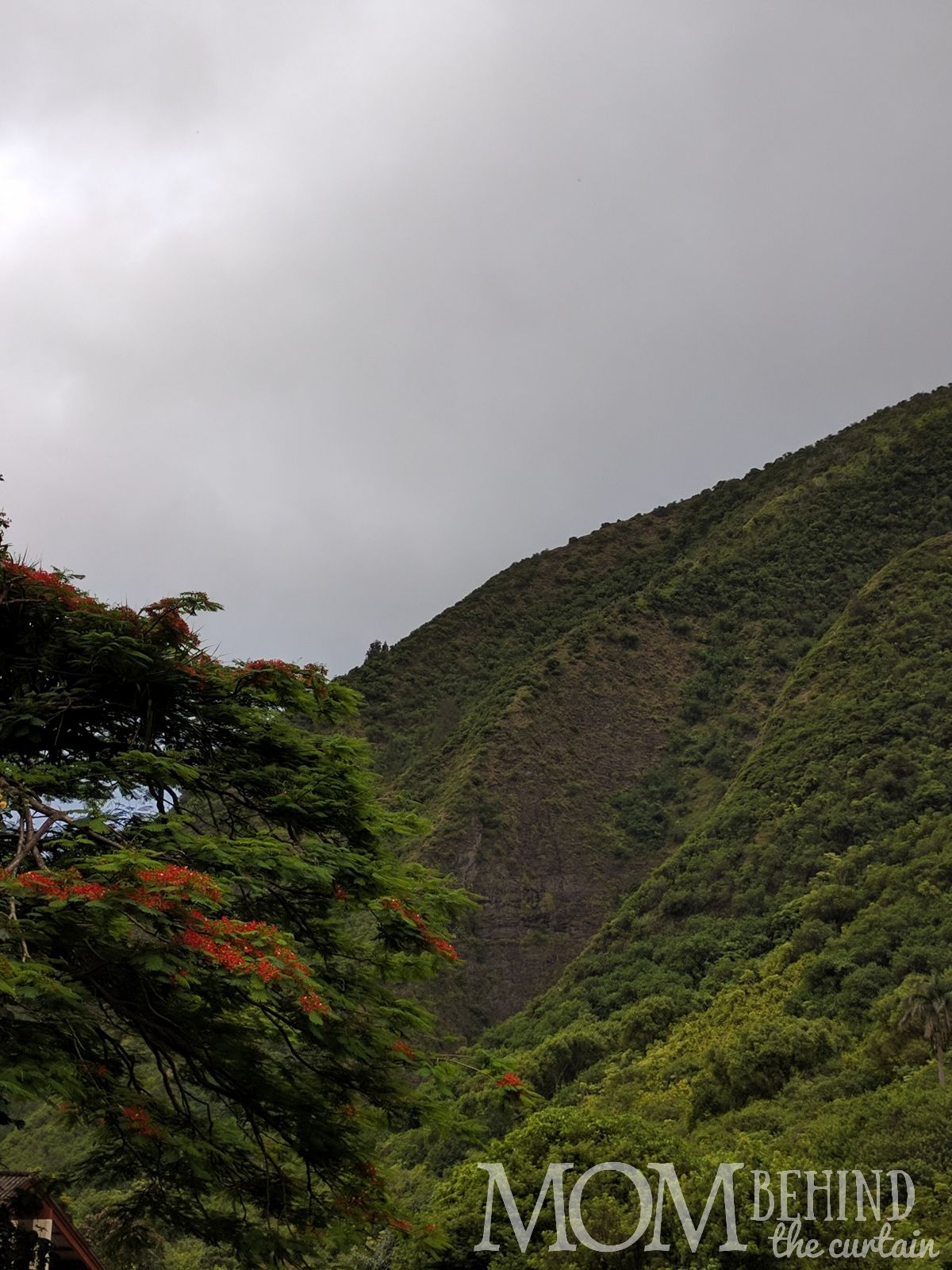 Maui tropical scenery, flowering tree, Iao Valley