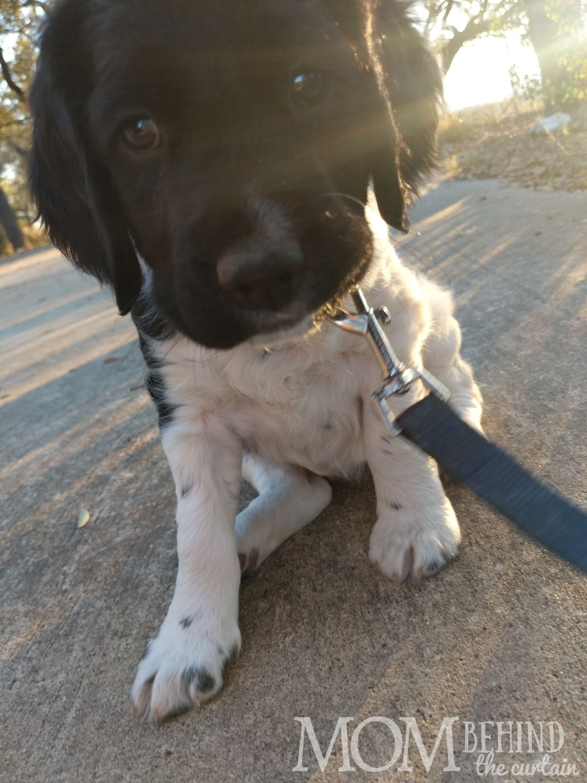 New puppy on leash. Looking to find a puppy near you, on sale or to adopt? You're probably going to search online. Read to learn how I found a puppy near me.