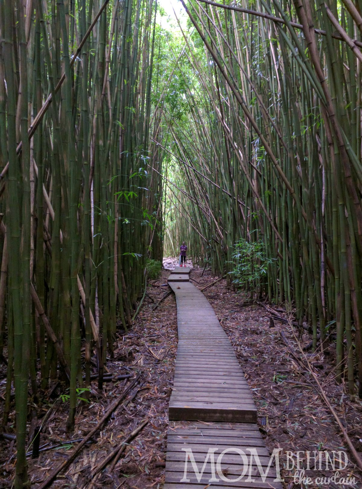 Pipiwai trail boardwalk through the bamboo forest off the Road to Hana.
