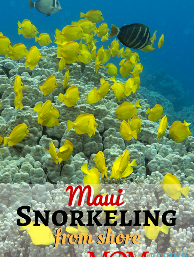 Snorkeling is one of the top things to in Maui, Hawaii on your vacation. Get tips about how to have your best time smorkeling with the family! Find out about snorkeling from shore in Maui.